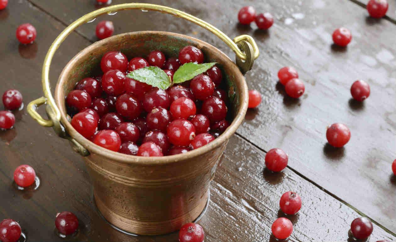 cranberry para malhar